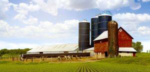 Dairy Farm. Hoof-Zink prevents hairy Heel Warts in Dairy Cattle