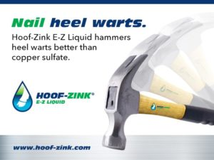 Nail Heel Warts in dairy cattle Hammer coming down. | Hoof-Zink E-Z Liquid foot bath for dairy cattle